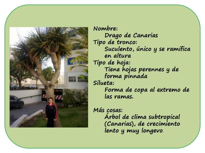 IRENE-y-sus-arboles2