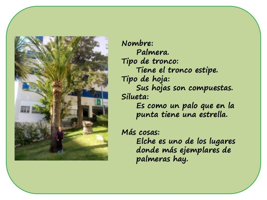 IRENE-y-sus-arboles3