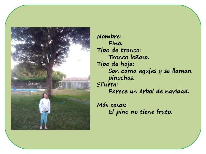 IRENE-y-sus-arboles4